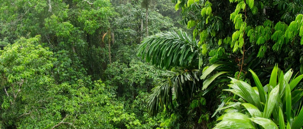 The beautiful amazon rainforest is dying